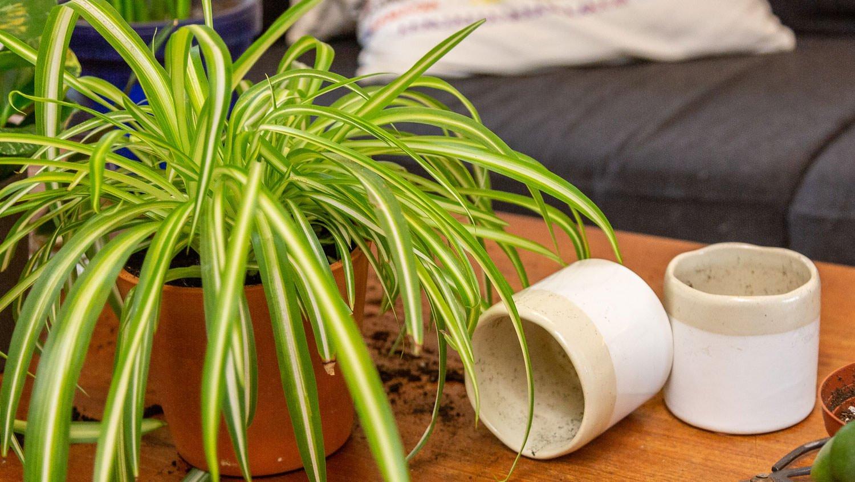 Combining Plants