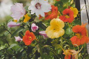 Five Impact Flowers