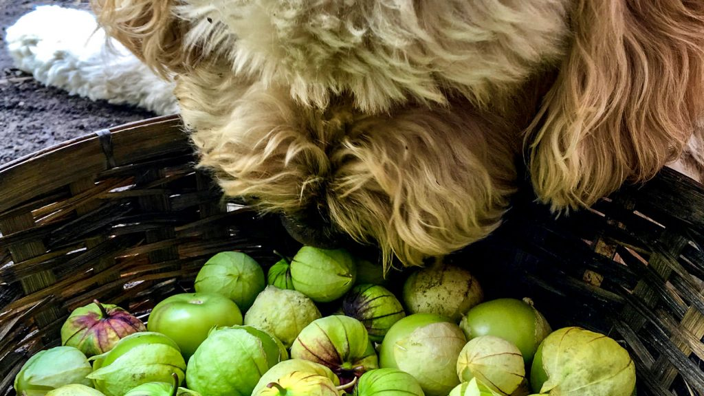 Sully With Tomatillos