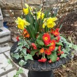 Spring Containers - Thrillers, Filler, Spiller