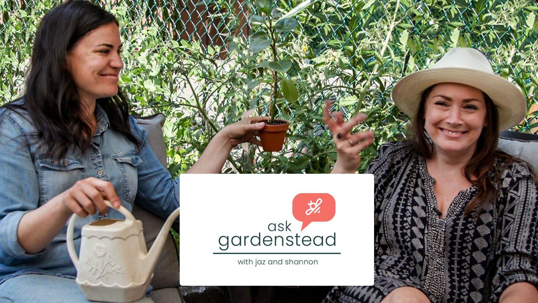 ASK gardenstead - Episode 1