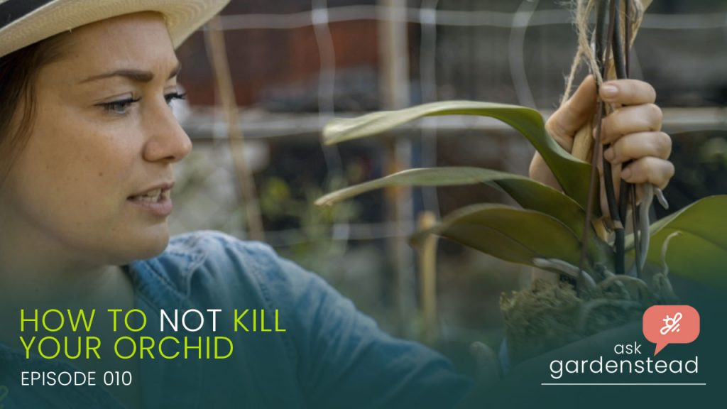 How To Not Kill Your Orchid - Ask garden stead