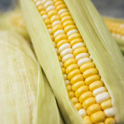 Corn - photo by Phoenix Han via unsplash