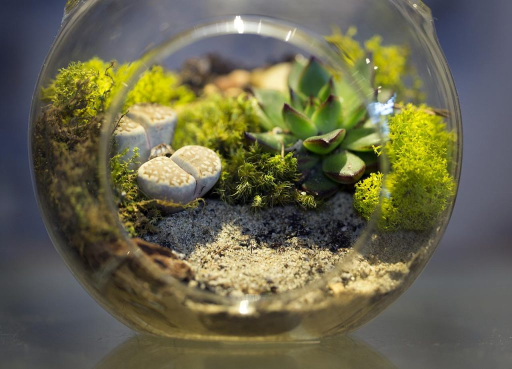 Photo 1 - Small Terrarium