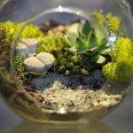 Photo 1 - Small Terrarium