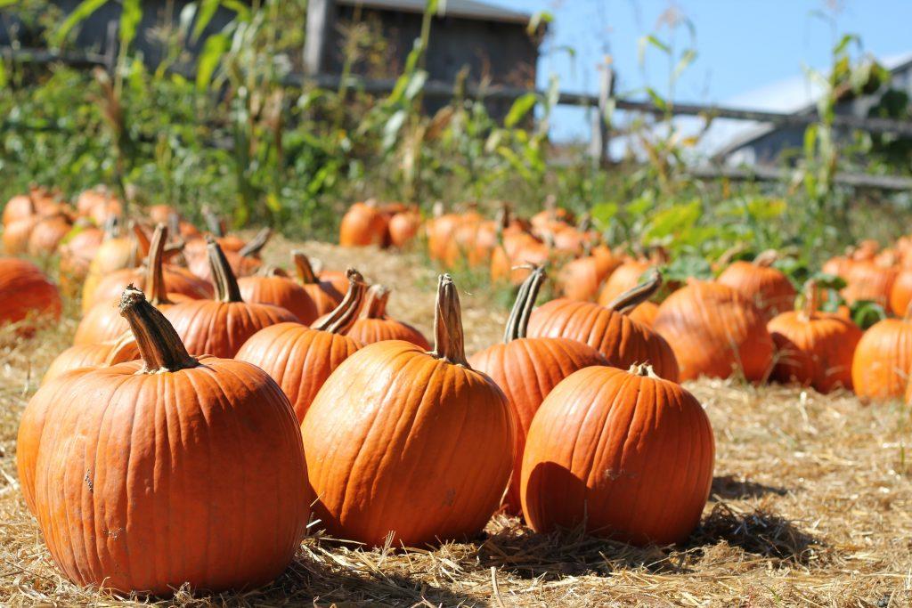 Pumpkins on the ground - Photo by Ana Essentiels via unsplash