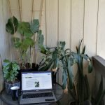 plant indoors with laptop