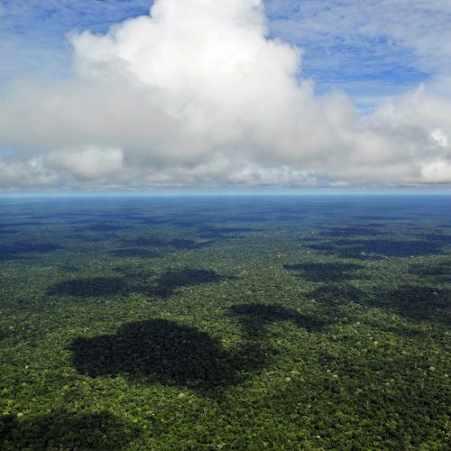 Amazon from Above; Amazon, Rainforest, Forest, Giant Lily Pads, Victoria Amazonica, Lungs of the Earth