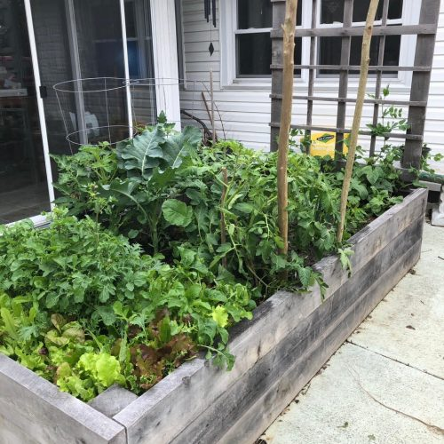 Andreina's raised bed