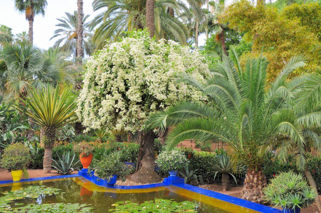 Jardin Majorelle Pond and Plants