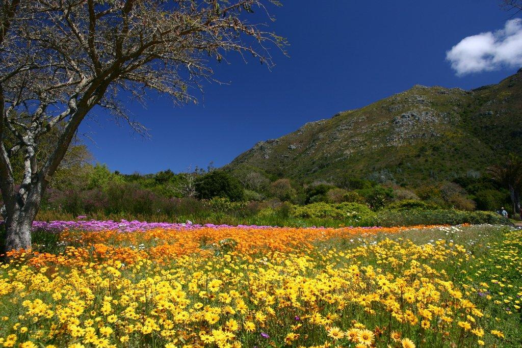 Kirstenbosch Botanical Garden Flowers