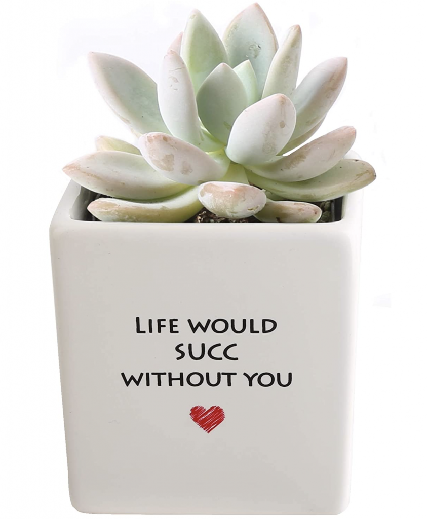 Life Would Succ Without You Funny Sweet Succulent Pot