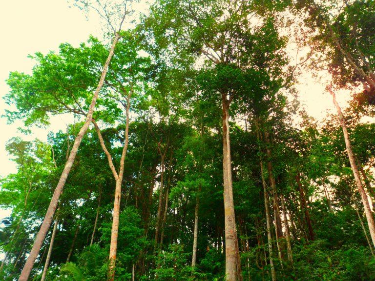 Photo 1 - Amazon Rainforest