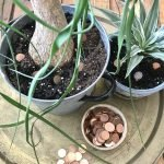Photo 1 - Pennies and Plants