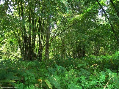 Photo 2 - Bamboo Forest