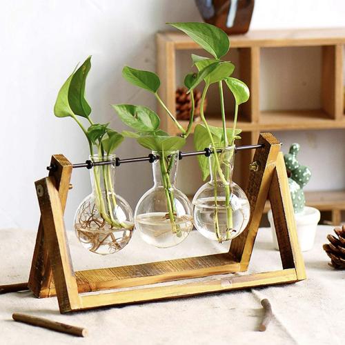 Three Glasses Wood Propagation Station