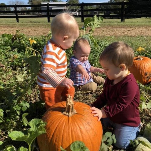Toddlers at the pumpkin patch