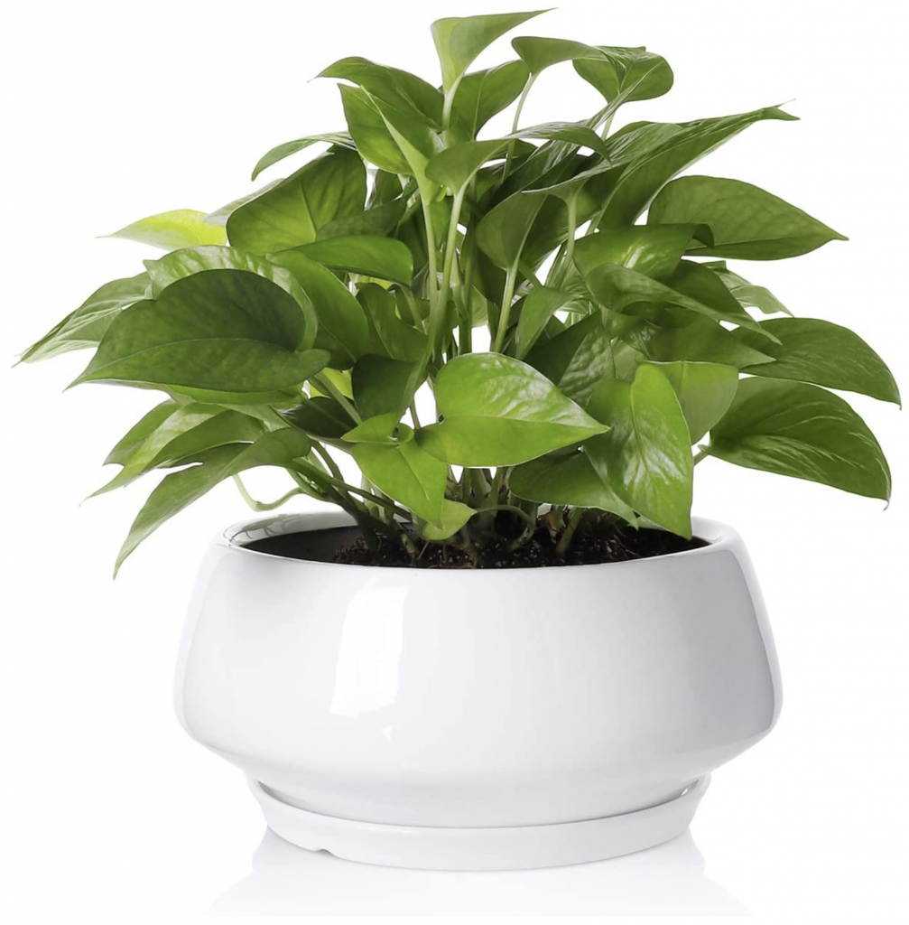 Wide and Shallow Plant Pot Ceramic White Modern Contemporary