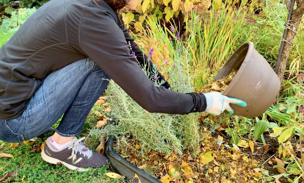 Winter Leaf Mulch for Flowers