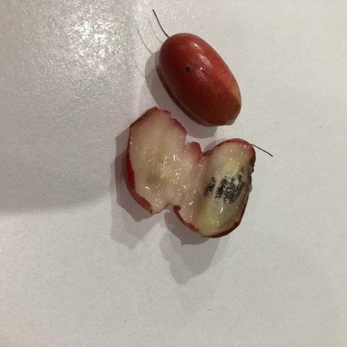 cut miracle fruit