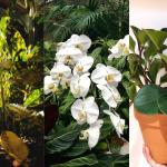 difficult houseplants