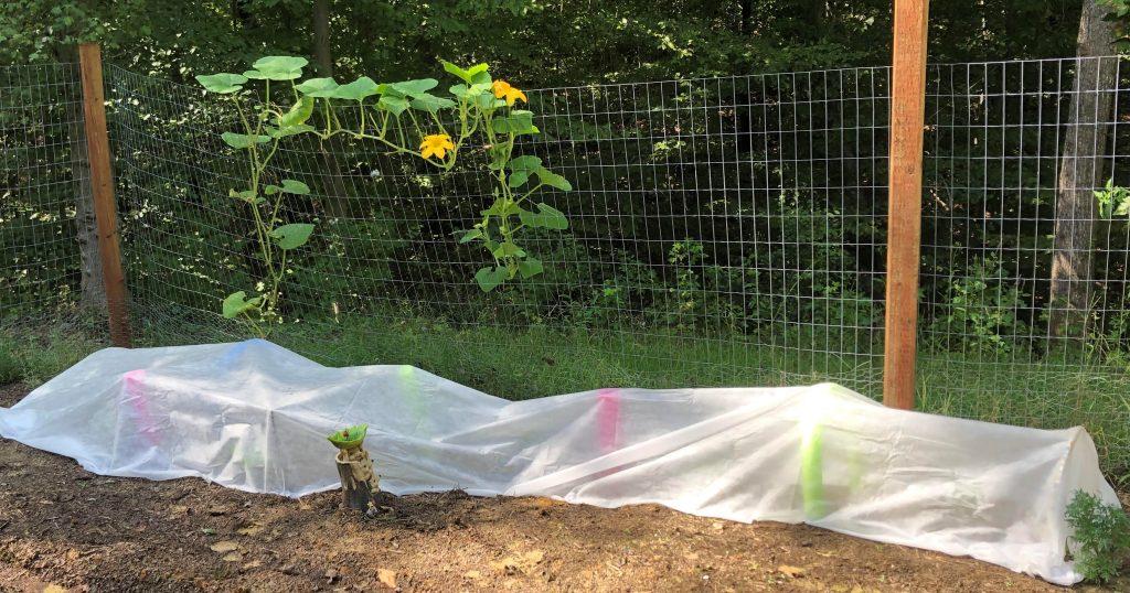 garden row cover