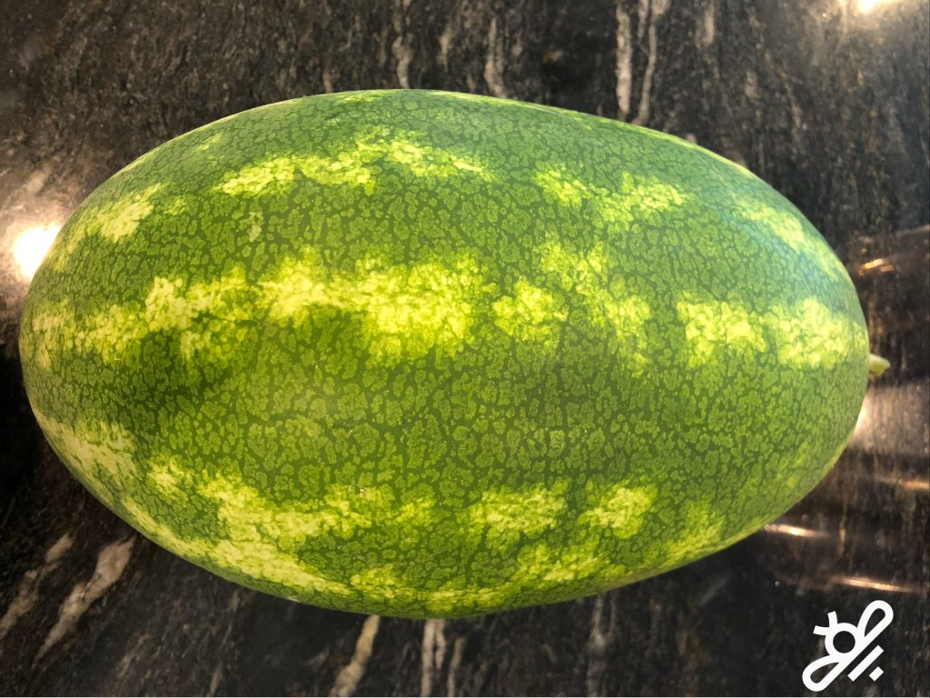 watermelon harvested