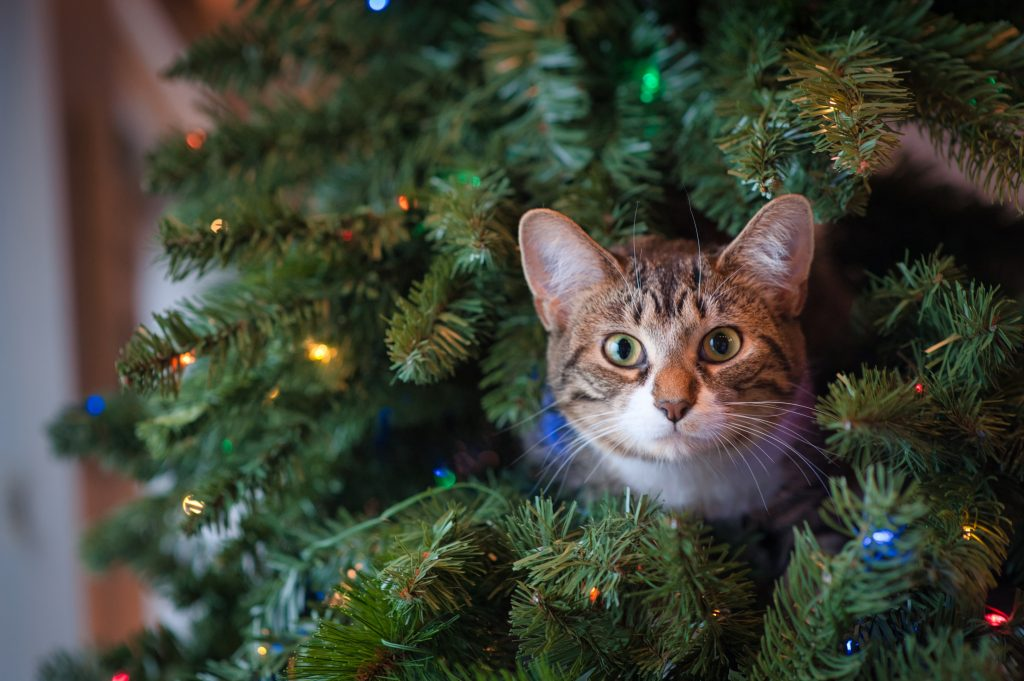 Cat in Christmas Tree - jessica lewis
