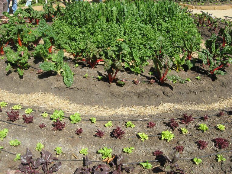 Victory Garden Veggies
