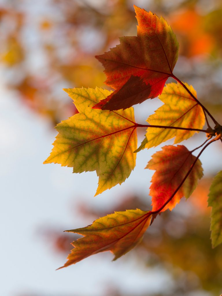 autumn leaves photo by Aaron Burden via unsplash