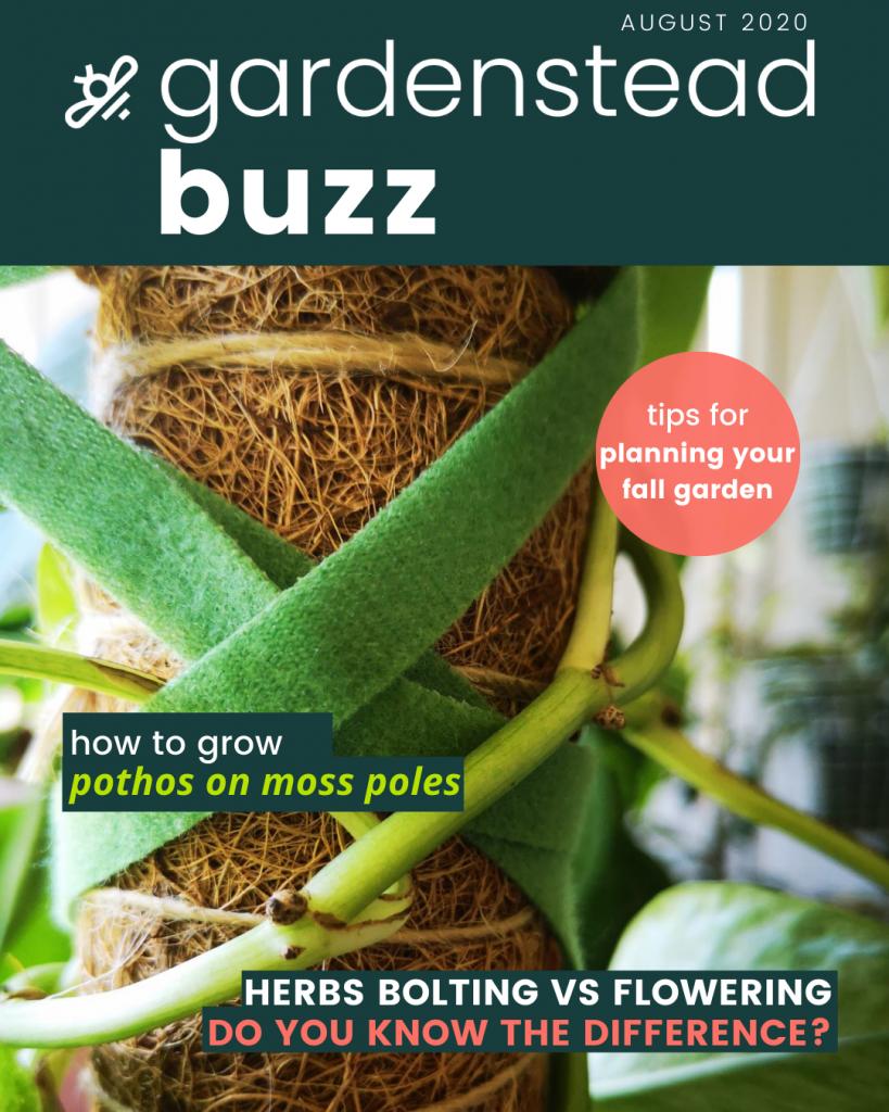 gardenstead buzz aug 2020