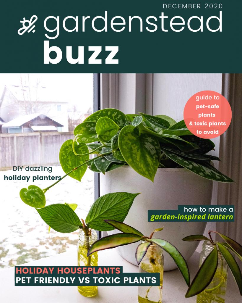 gardenstead buzz dec 2020