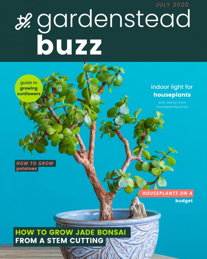 gardenstead buzz july 2020