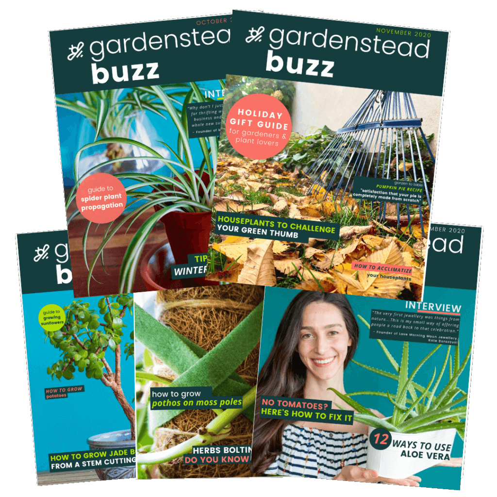 gardenstead buzz magazine covers