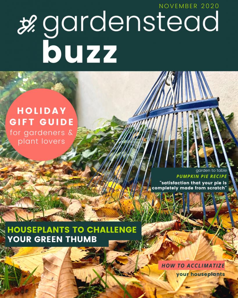 gardenstead buzz nov 2020