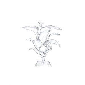 Christmas - Flower