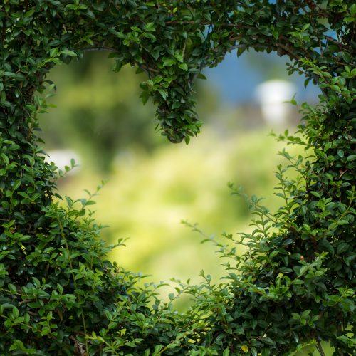 Photo 1 - Garden leaf heart
