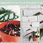 Plant Swap Progress