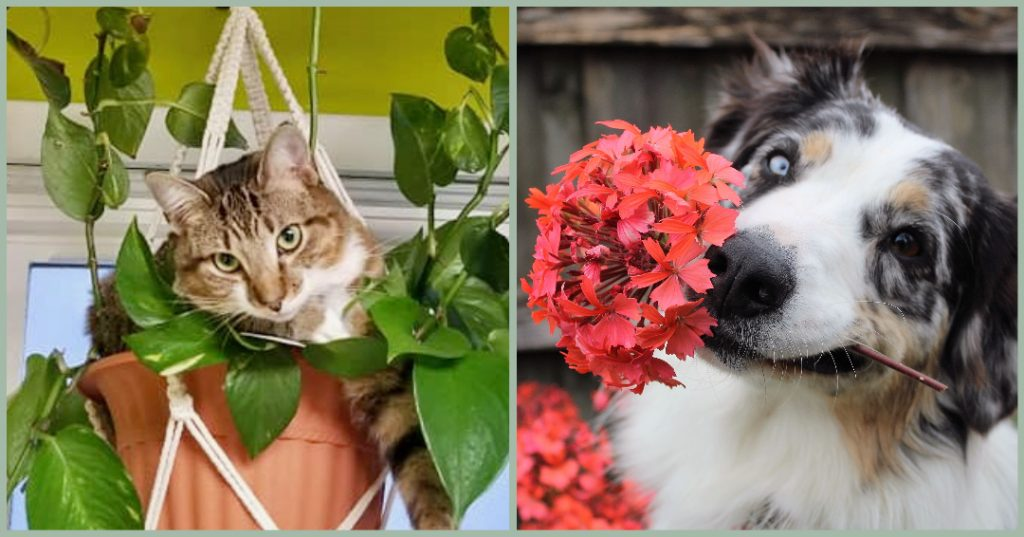 How to Keep Pets out of Plants