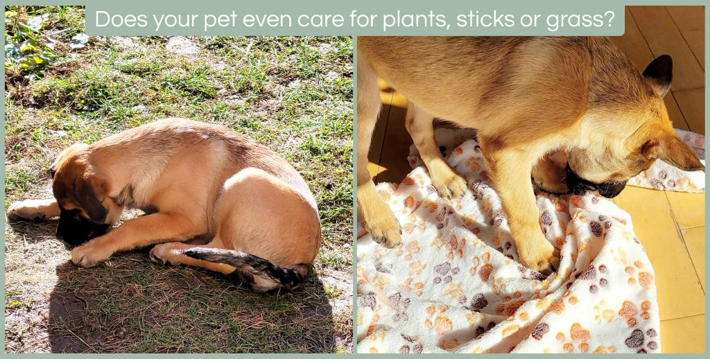How to keep pets away from plants
