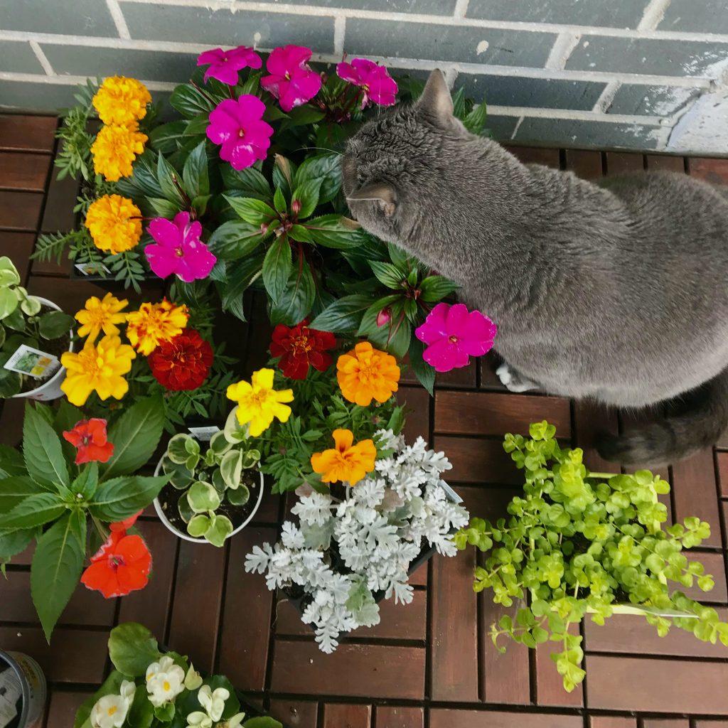 Interest Test Plant Buffet for Pets