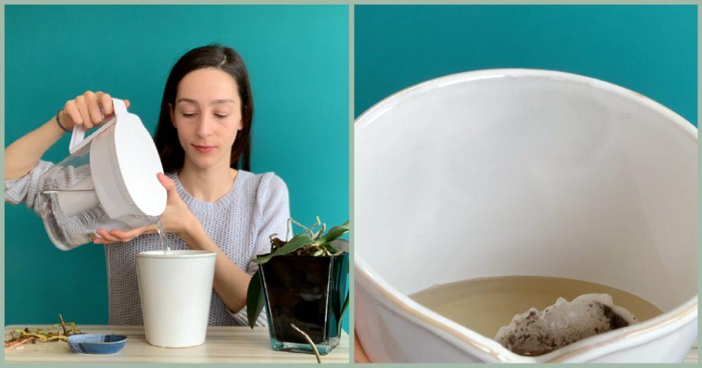 Orchid Tea Bath