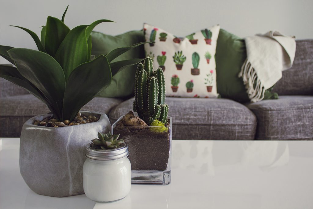 Plant with Pebbles - pexels