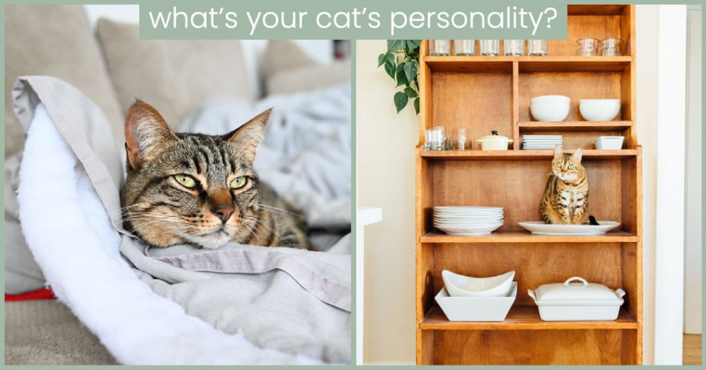 cat personality