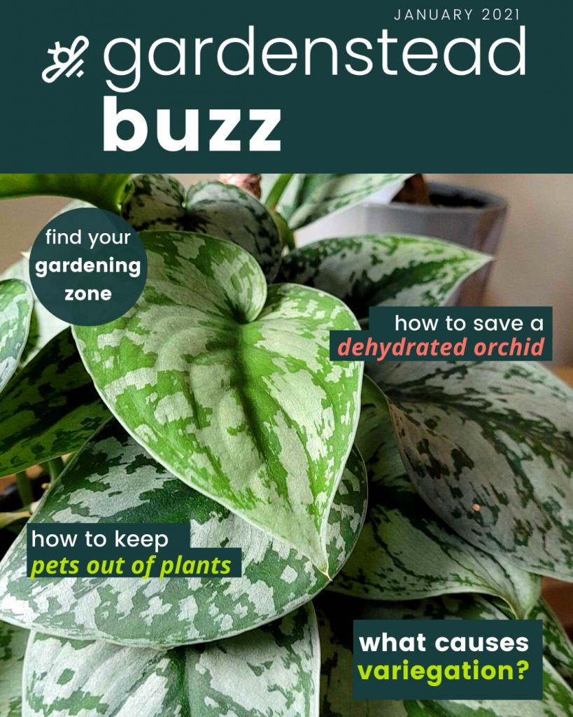 gardenstead buzz jan 2021