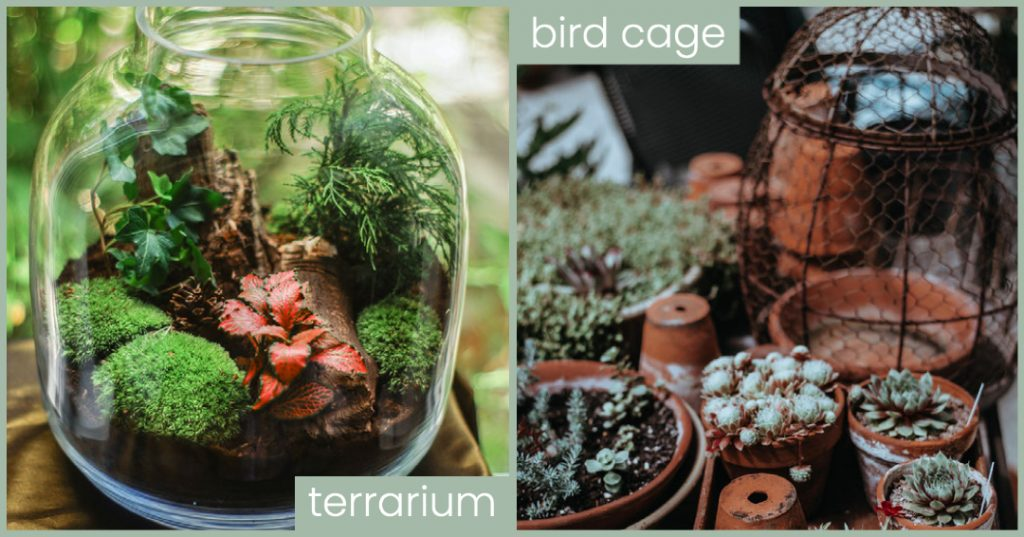 plants on lockdown