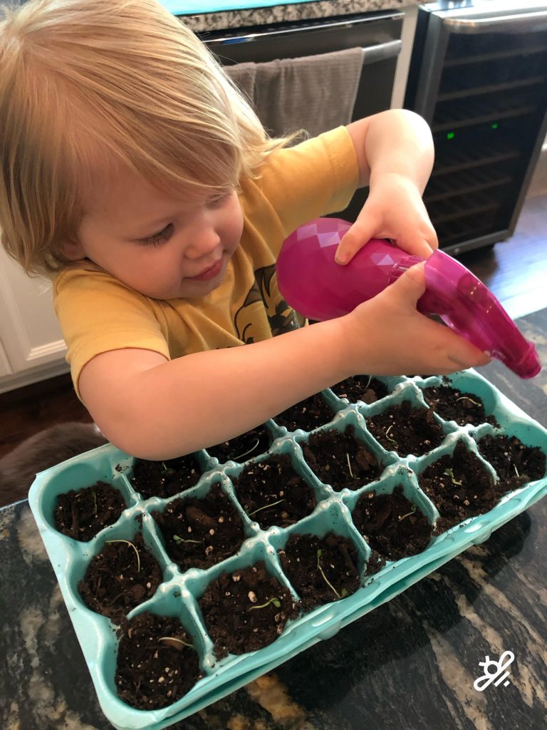 remove cover when seedlings emerge