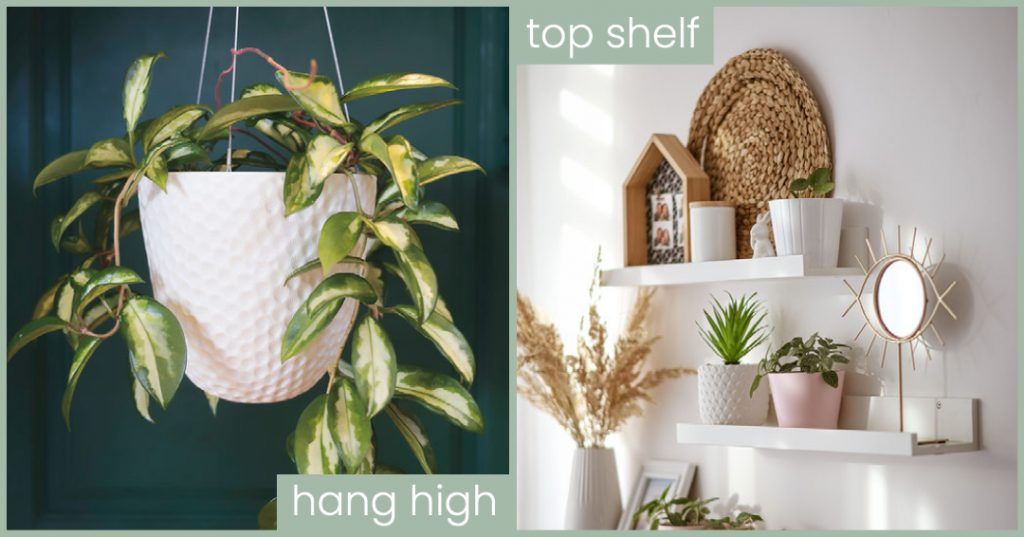 too high to reach plants