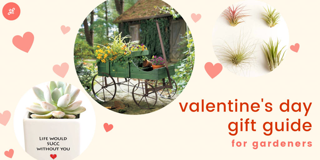 valentines day gift guide for gardeners and plant lovers