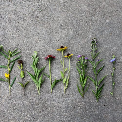 assorted wildflowers on the ground